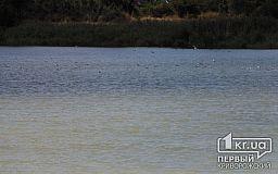 В Кривом Роге в реке Ингулец ищут тело утопленника