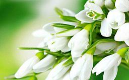 Криворожанам на заметку: за торговлю первоцветами грозит немалый штраф