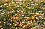 Погода в Кривом Роге на 18 октября
