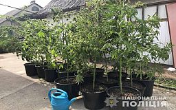 20 тысяч растений конопли изъяли полицейские Днепропетровской области за 4 месяца спецоперации