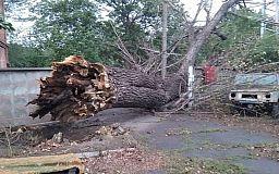 Рухнувшие деревья и отключение света: последствия непогоды в Кривом Роге