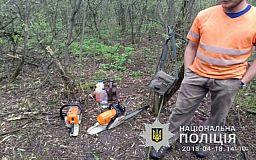 За вырубку леса в тюрьму могут отправиться руководитель лесничества и его двое коллег
