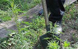 Українка запропонувала Петру Порошенку легалізувати марихуану
