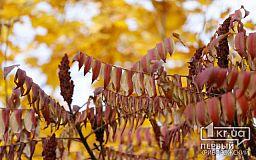 В Кривом Роге 28 октября погода будет ясной, гороскоп сулит удачный день