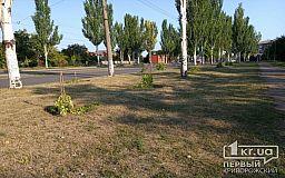 В Кривом Роге неизвестные поломали молодые деревья