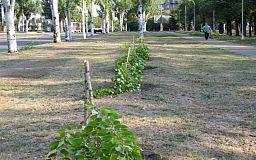 Криворожские чиновники рассказали об убытках, которые нанесли неизвестные, сломавшие молодые деревья
