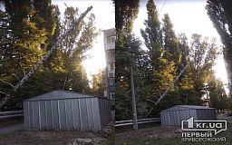 В Кривом Роге упало дерево и повисло на проводах