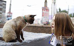 75% бездомных собак и кошек когда-то были домашними