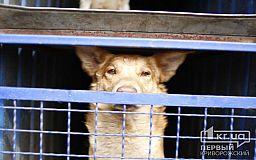 Центр обращения с животными возглавит известная криворожская зоозащитница