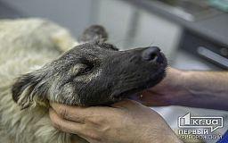 Прививки от бешенства и стерилизацию бродячих животных будут делать в человеческих условиях
