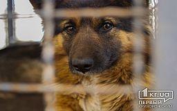 Стерилізація тварин під Кривим Рогом - розкіш чи необхідність