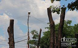 Криворожан предупредили о временных неудобствах из-за омолаживания деревьев