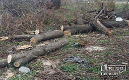 В Кривом Роге «накрыли» преступную группировку по вырубке леса