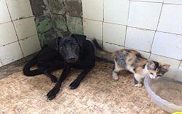 В Кривом Роге волонтеры обустраивают приют для животных за свой счет, им нужна помощь
