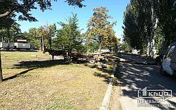Люди на бричке увезли дерево, которое упало на тротуар, - криворожанин