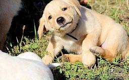 В субботу криворожан ждет Всеукраинская выставка собак и закрытие экстремального сезона