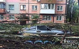 В Кривом Роге огромная ветка изуродовала машину