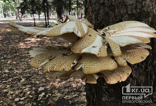 174 українця отруїлися грибами, - у МОЗ закликають не ризикувати здоров'ям