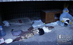 Оберегая щенят, собака напала на жителей спального района в Кривом Роге