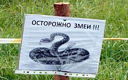 Криворожан предупреждают об опасных змеях