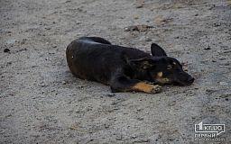 В исполкоме не подтверждают информацию о применении наркотических веществ в криворожском Центре обращения с животными