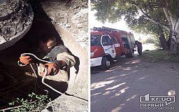 Криворожские пожарные спасли собаку