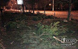 Надругательство над природой. После праздников кладбище елок появилось в Кривом Роге