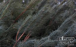 Что делать с елкой после новогодних праздников