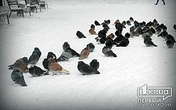 Погода в Кривом Роге на 16 января