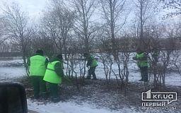 Озеленение в Кривом Роге продолжается и зимой