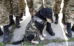 В Украине стартует новый проект по реабилитации бойцов АТО: их лечением займутся собаки