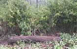 В Кривом Роге продолжается массовая порубка леса