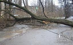 Непогода в Кривом Роге: Крупное дерево перекрыло движение по улице Революционная