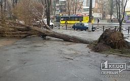 Непогода в Кривом Роге: На криворожанку упало дерево. Сломано 4 ребра