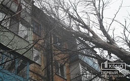 Непогода в Кривом Роге: Два крупных тополя упали на жилой дом по улице Мануйлова