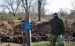 Кто «крышует» незаконный спил деревьев и воровство труб в зоне обрушения Кривого Рога?