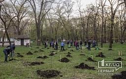 В Кривом Роге стартовала всеукраинская акция «Дерево - душа героя!»
