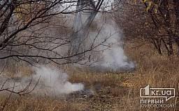 В Кривом Роге милиция игнорирует факты сжигания листьев