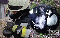Пожарные Днепра спасли кота и собаку
