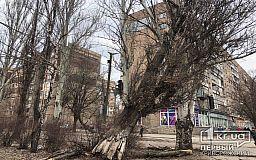 На одном из центральных проспектов Кривого Рога падает огромный тополь