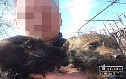 Захищав сина, - криворізький полісмен пояснив чому вилами поранив собаку