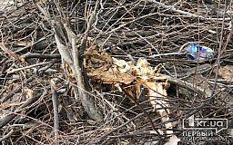 В Кривом Роге на участке, где упало дерево, неделю не убирают обрезанные ветки
