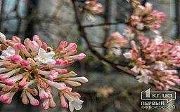 Погода в Кривом Роге и гороскоп для горожан 31 марта