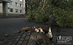 В Кривом Роге из-за урагана с корнями повырывало десятки деревьев