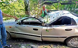 Во время бури в Кривом Роге тополь полностью смял машину