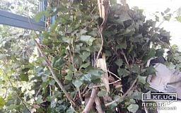 Упавшее дерево снесло кондиционер, ветки пробили окно на балконе, - криворожане
