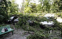 Два тополя во время урагана разбили 11 машин криворожан
