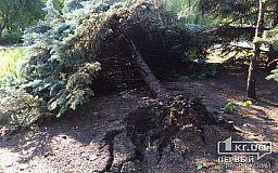 В Кривом Роге ураганом повалило около 20 голубых елей
