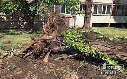 На выходных «Сансервис» продолжит убирать поваленные деревья в Кривом Роге