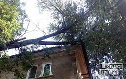 В Кривом Роге рухнувшее дерево повредило крышу, люди живут с дождем внутри дома